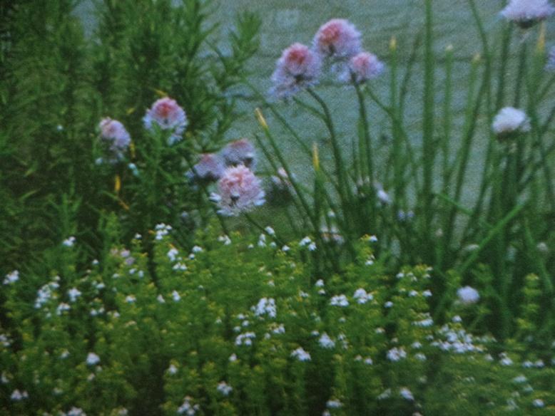 Композиция из пряных трав и растений