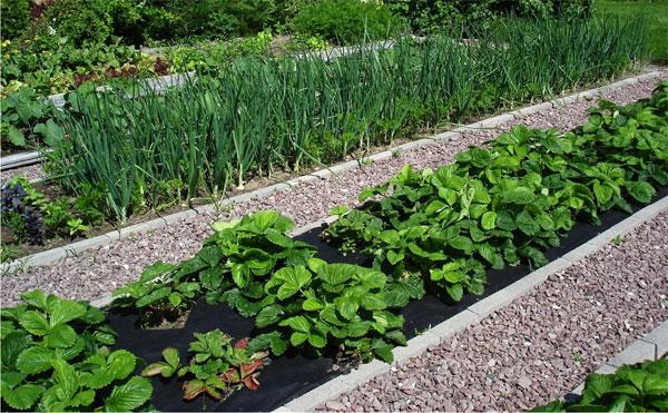 севооборот — он поможет избежать болезни и утомление почвы